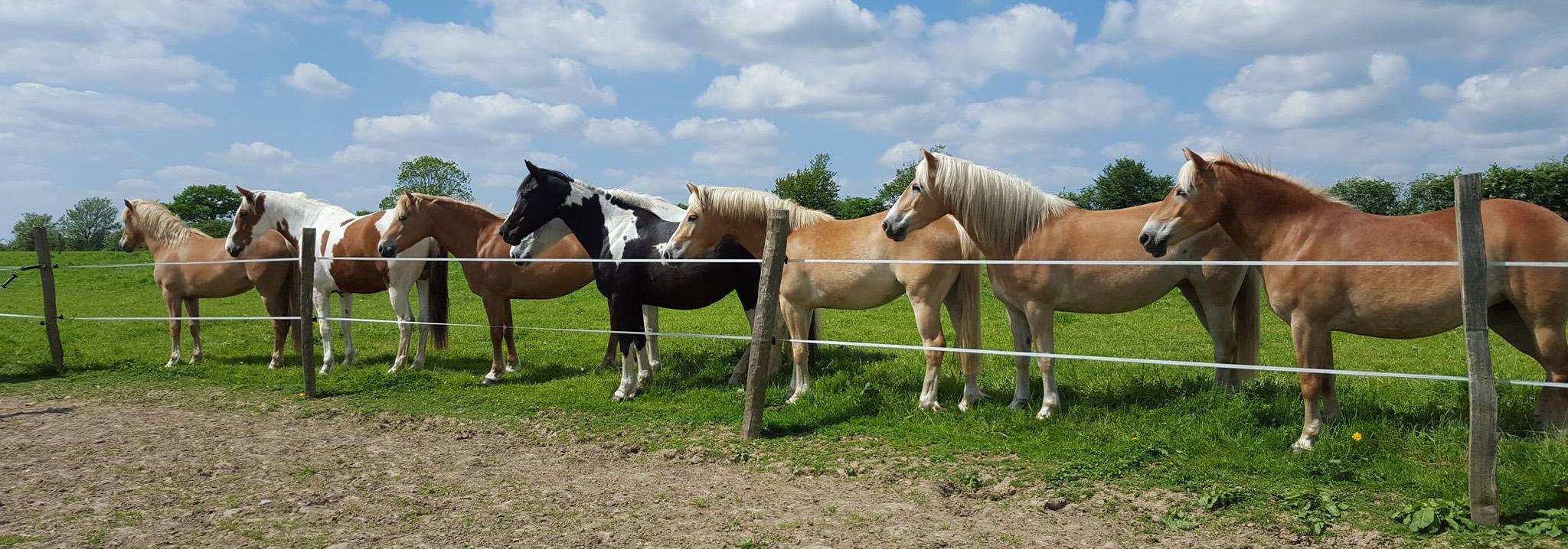 chevaux-pre-ecuries-des-perrelles-la-vacquerie