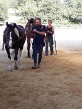 travail polyvalent pour vos chevaux - ecuries des perrelles - la vacquerie