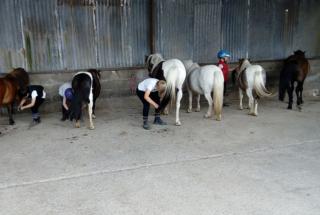 le-coin-des-poney-ecuries-des-perrelles-la-vacquerie